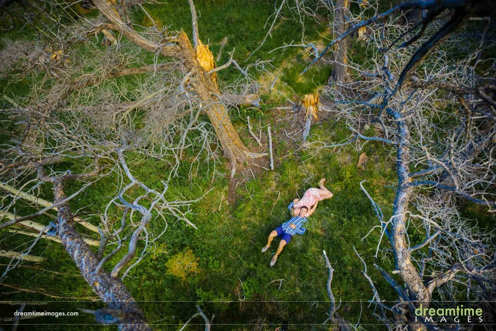 Maternity photos from above in a tree