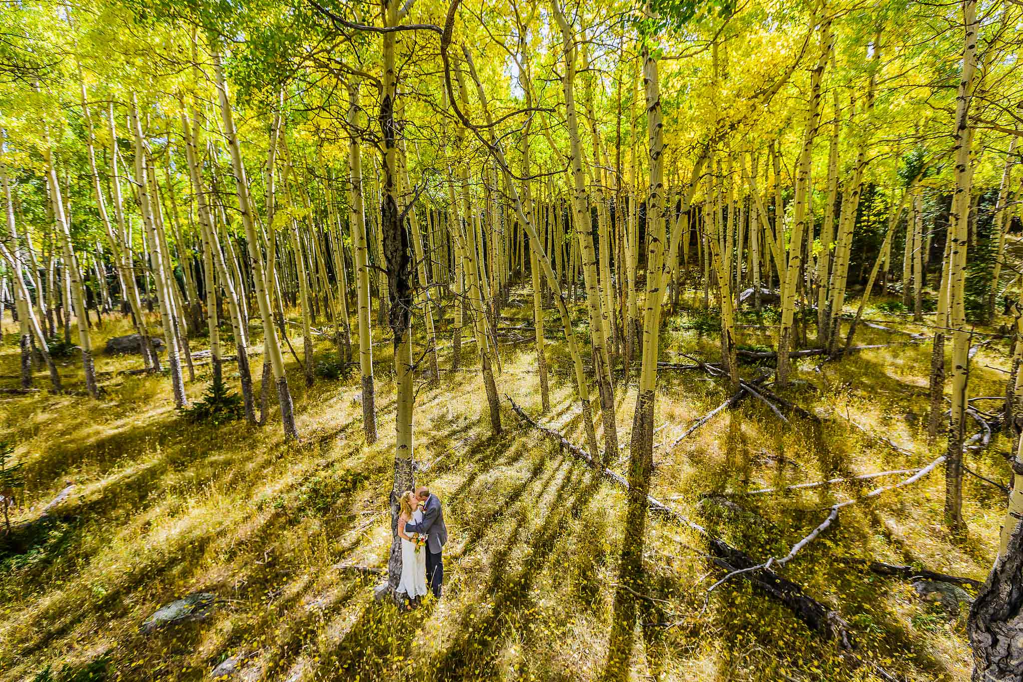 Wedding photo in Rocky Mountain National Park aspen grove