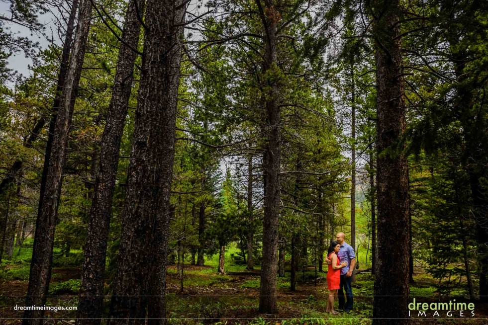 A bride and groom in the forest of RMNP