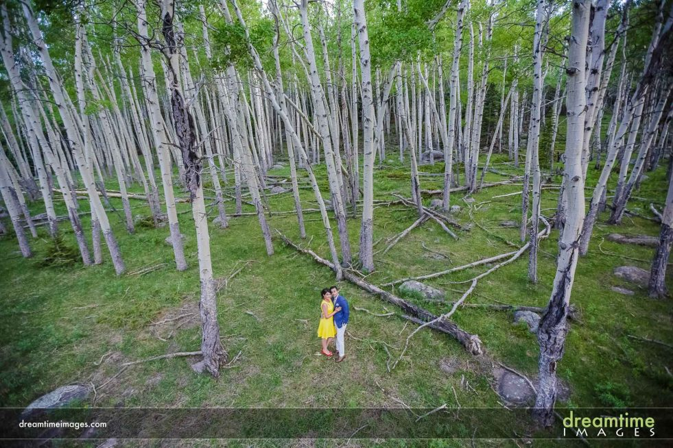 engagement photo in aspen grove